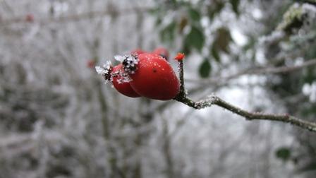 Yoga et nature en hiver Oise